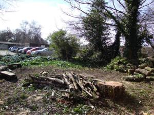 Area cleared of brash at Holly Lodge School