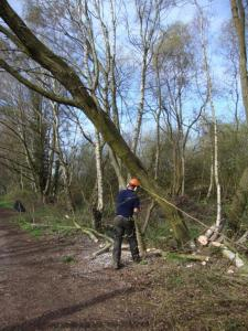 Mark Felling Tree