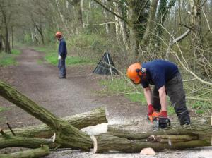 Mark cutting up tree