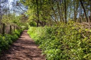 MGL laid hedge 04_14