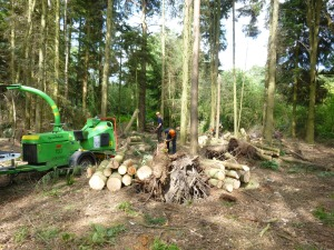 Chipping and stacking wood in the new glade