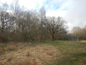Southwood's main meadow (S. Bunce)