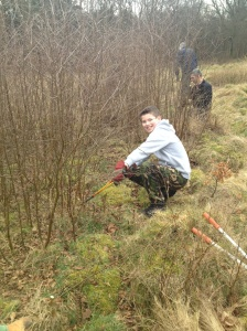 Clearing invasive birch at Southwood (R. Rathmell)