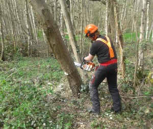 Student Tobias felling leaning tree