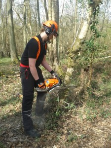 Student Tobias felling small tree