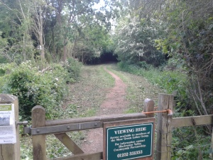 Path to Coleford Hide after cut