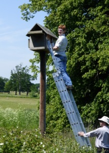 Callum checking Swallowfield pole box