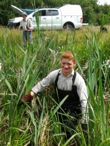 Callum pulling balsam in Hawley Meadows