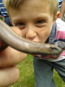 Toby investigating slow worm