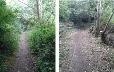 Dead elms felled and path cut back