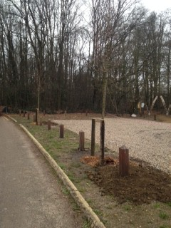 New trees planted at Rushmoor Bottom Car Park