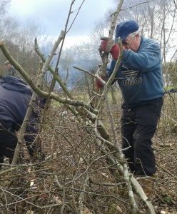 Tony building a brash wigwam over the coppice stool
