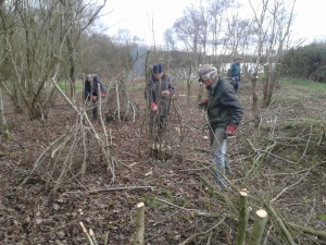 Volunteers coppicing and pollarding