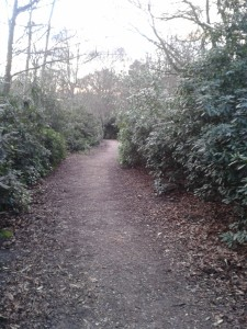 Overgrown path before work