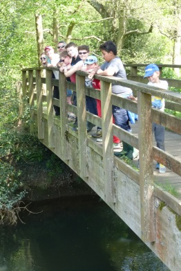 Pooh Sticks and wildlife walk