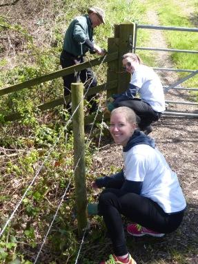 Repairing fence