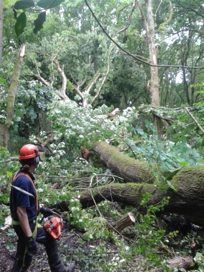 Andrew by large fallen oak