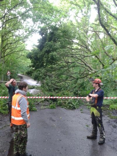 Fallen tree made safe overnight