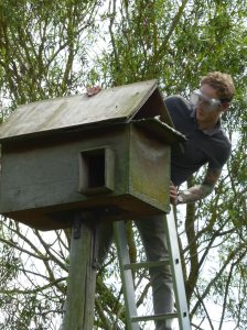 Joining the barn owl nest box monitoring