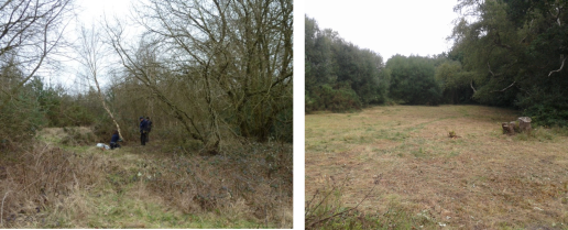 Kennels Lane Meadow improvement since 2011 - view 2