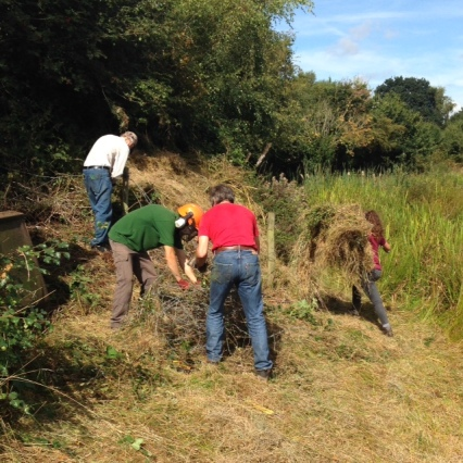 Volunteers removing wire and hay