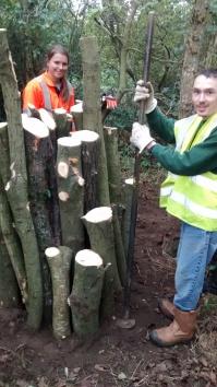 New Frimley Hatches stumpery