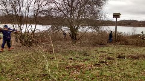 Scrub encroaching meadow