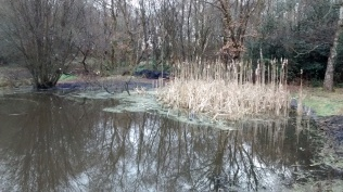 Cleared NW corner of pond