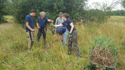 Volunteers pulling up Ragwort from Hawley Meadows