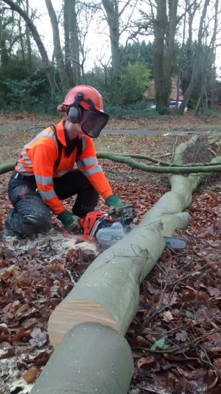 Jenny processing a felled tree into logs