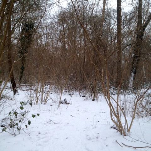 SWIG 02-18 coppicing hazel snow