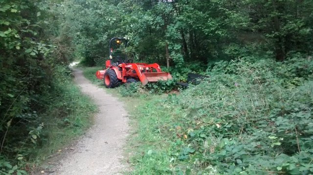 St Catherines Meadow before path cut