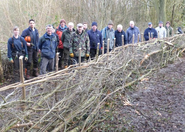 the-tuesday-hedging-volunteers